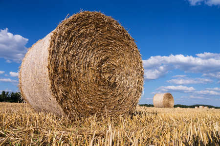 straw bales in summer with blue sky and sunlight