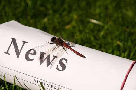 lates: dragonfly on newspaper on meadow