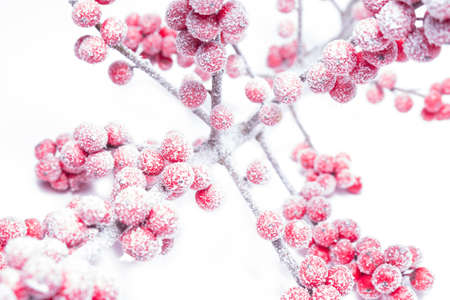 rowanberry: icy rowanberry on white background