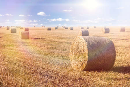 late summer: Straw bales landscape in late summer Stock Photo