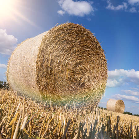 late summer: Straw bales in late summer