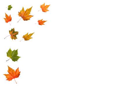 falling autumn leaves isolated