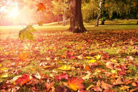 가을 나무와 햇빛의 떨어지는 나뭇잎 스톡 콘텐츠