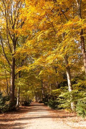 walk in: autumn walk in a park