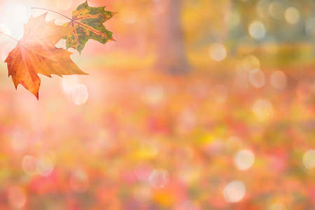 autumn background: autumn background with leaves Stock Photo