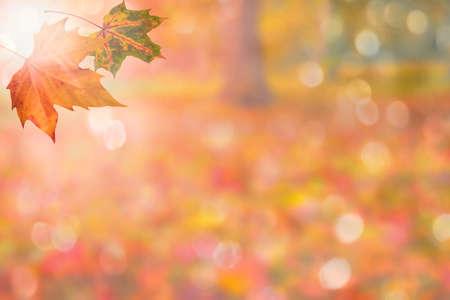 autumn background with leaves Standard-Bild