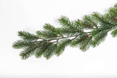 fir  tree: Branch fir tree isolated