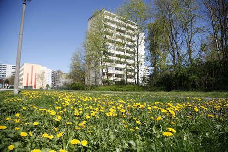 marzahn: Dandelion and apartment building in Berlin Marzahn