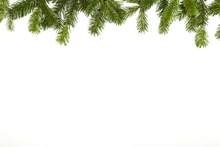 Fir branch isolated on white Stock Photo