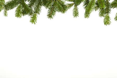 abetos: rama de abeto aislado en blanco Foto de archivo