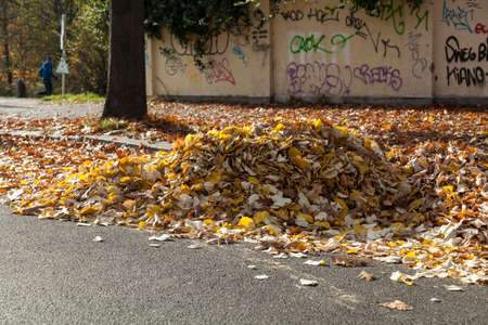 swept: Heap of autumn leaves on street