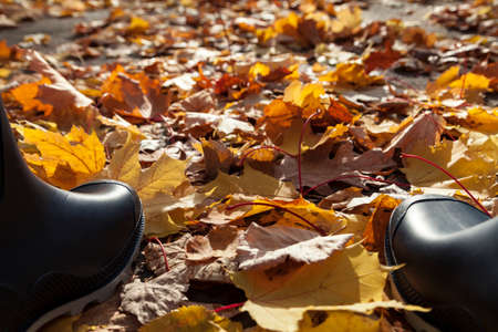 rubber boots: Rubber boots on autumn leaves