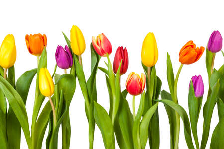 Different tulips on a white background