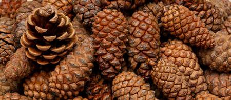 pine cones background, top view