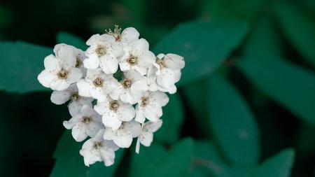 white flower on green background Фото со стока