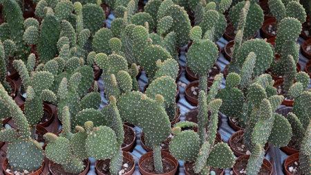 front view cactus background, close up Фото со стока