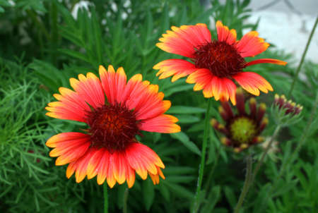 Wild Flowers Reklamní fotografie