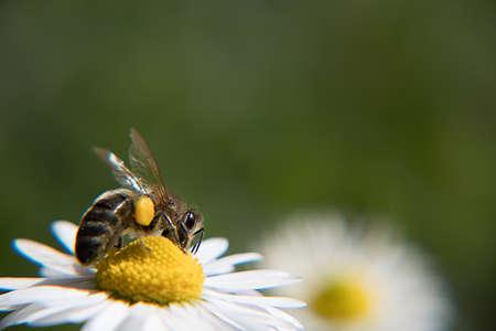 Bee at work Banco de Imagens - 99355874