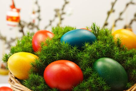 Mosses in easter basket with painted eggs photo