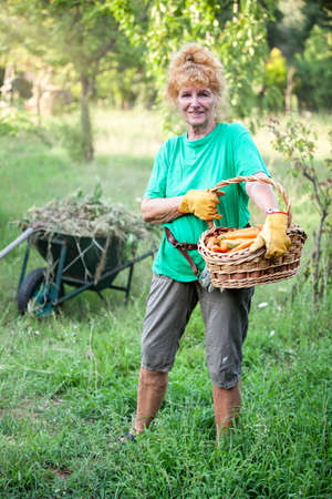 Pensioner in the garden with a basket full carotts
