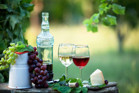 Still life with red and white wine in a green garden at sunset Banque d'images