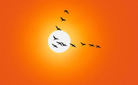 Geese are flying in v formation in front of a red sky