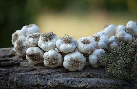 Garlic on a wooden rustic underground