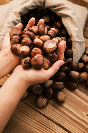 Close up shot of chestnut in the woman hands and a linen bag on a wooden table
