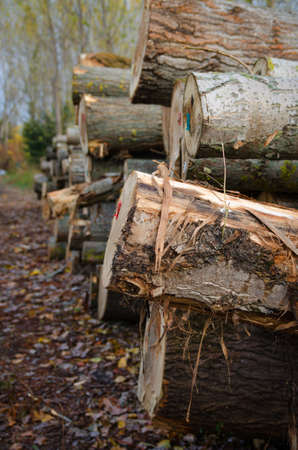 neatly stacked: Logs neatly stacked