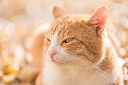 Boze kat buitenshuis