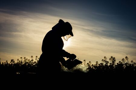 apiarist: Working apiarist silhoutte with the smoker on the field. Backlit scene Stock Photo