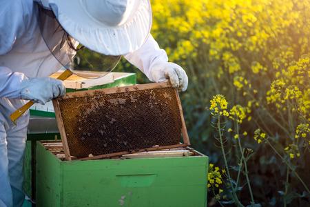 開花菜の花フィールドのはちの巣を確認フル装備で養蜂家。Selecive フォーカス、レンズフレア、コピー スペース