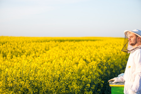apiarist: Proud apiarist, on the rapeseed field, near his hives, looking into the Sun. Selective focus, Copy space Stock Photo