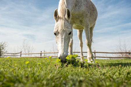 low  angle: Domestic arabic horse, low angle shot