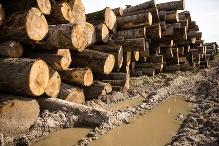 neatly stacked: Freshly chopped tree logs stacked neatly on top of each other in a pile. Selective focus
