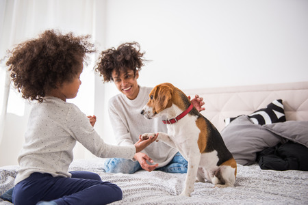 Young cute girl playing with her dog. Stockfoto