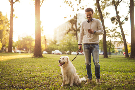 Handsome man walking his dog while texting outdoors. Stock Photo