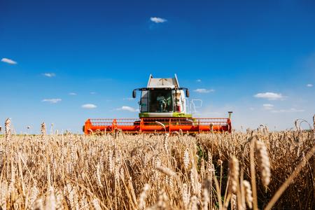 Kombinieren Sie das Ernten des Feldes des Weizens auf einem Sonnenuntergang. Standard-Bild - 65987727