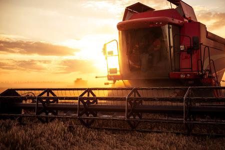 Kombinieren Sie das Feld des Weizenfeldes auf einem Sonnenuntergang ernten Standard-Bild - 66547585