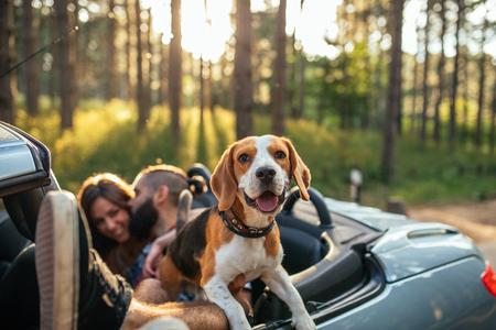 Shot van een jong stel met een hond die in een cabriolet rijdt. Stockfoto