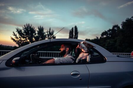 Cute dog enjoying the ride in the car. Archivio Fotografico
