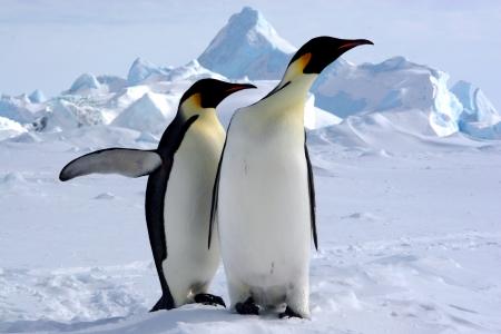 mais: Mais où est le pôle sud    Manchots Empereurs Antarctique