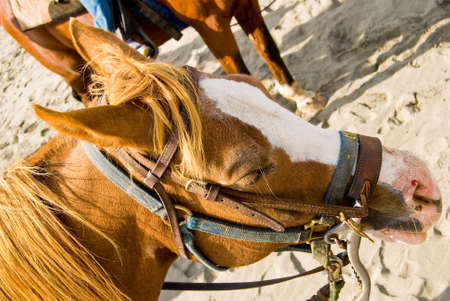 escaping: Head Shot of a Horse On a Bright Sunny Day