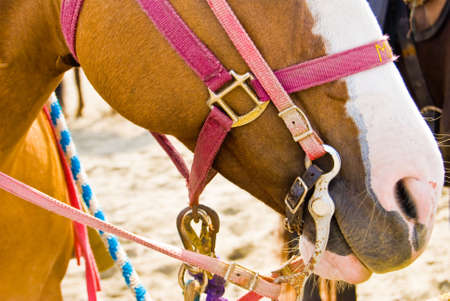 Close-up shot of a Horse on a Bright Sunny Day