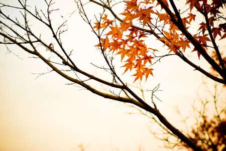 올 가을 풍경의 세피아 톤 가을의 본질을 나타 스톡 콘텐츠