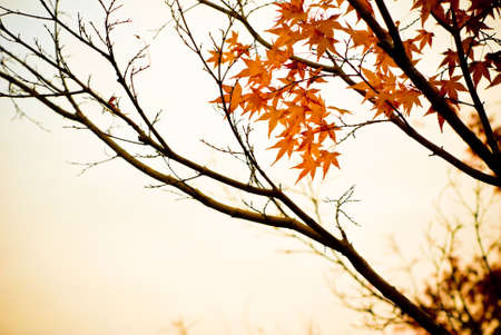 fall of leafs: The sepia tone of this fall scenery bring up the essence of fall