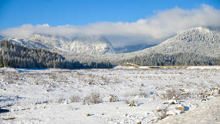 White Winter Snowfield Nature Landscape