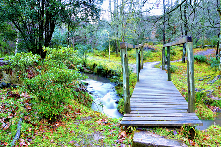 bridge forest: Bridge, forest and stream, Hogsback, Eastern Cape, South Africa Stock Photo