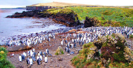 King penguins and elephant seals, Marion Island, Prince Edward Islands