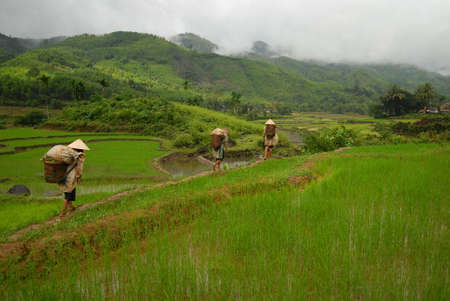 Workers entering the rice paddies after a rainstorm photo